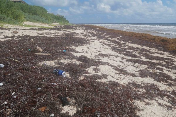 rubbish and seaweed on the beach in sian kaan