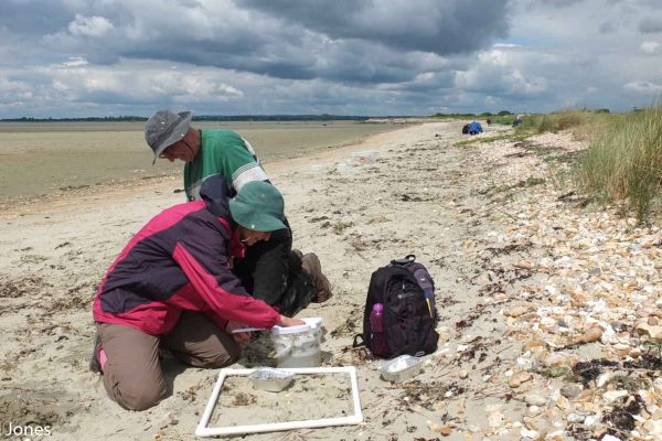surveying the south coast