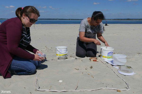 undertaking a survey on the beach