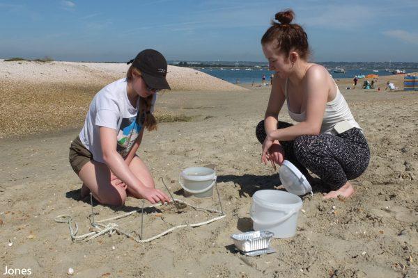 survey on the beach
