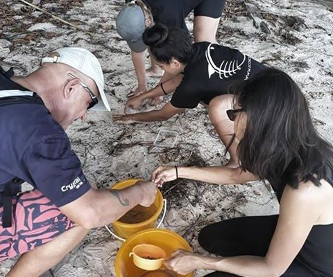 microplastic survey in Koh Tao